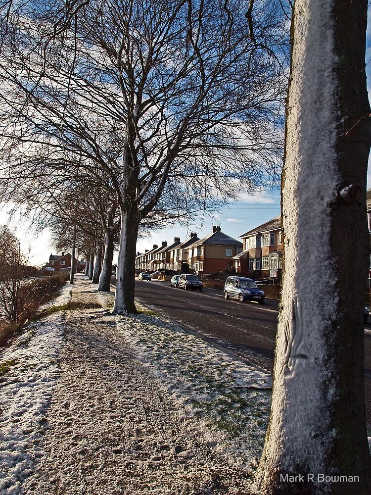 Snow blown trees by Mark R Bowman