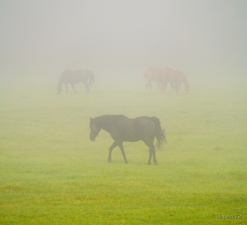 Horses in the mist by alopezc72