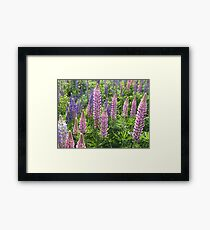 I'm Loopy For Lupins. Framed Print