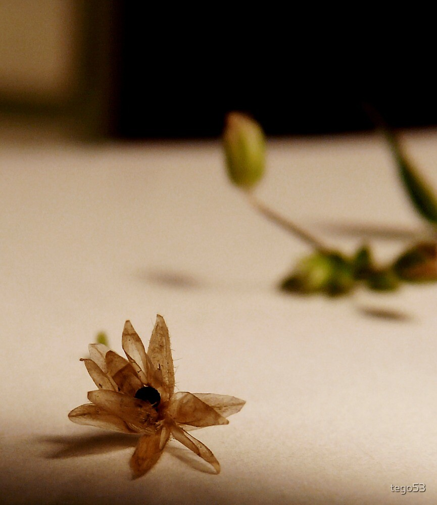 little brown flower by tego53