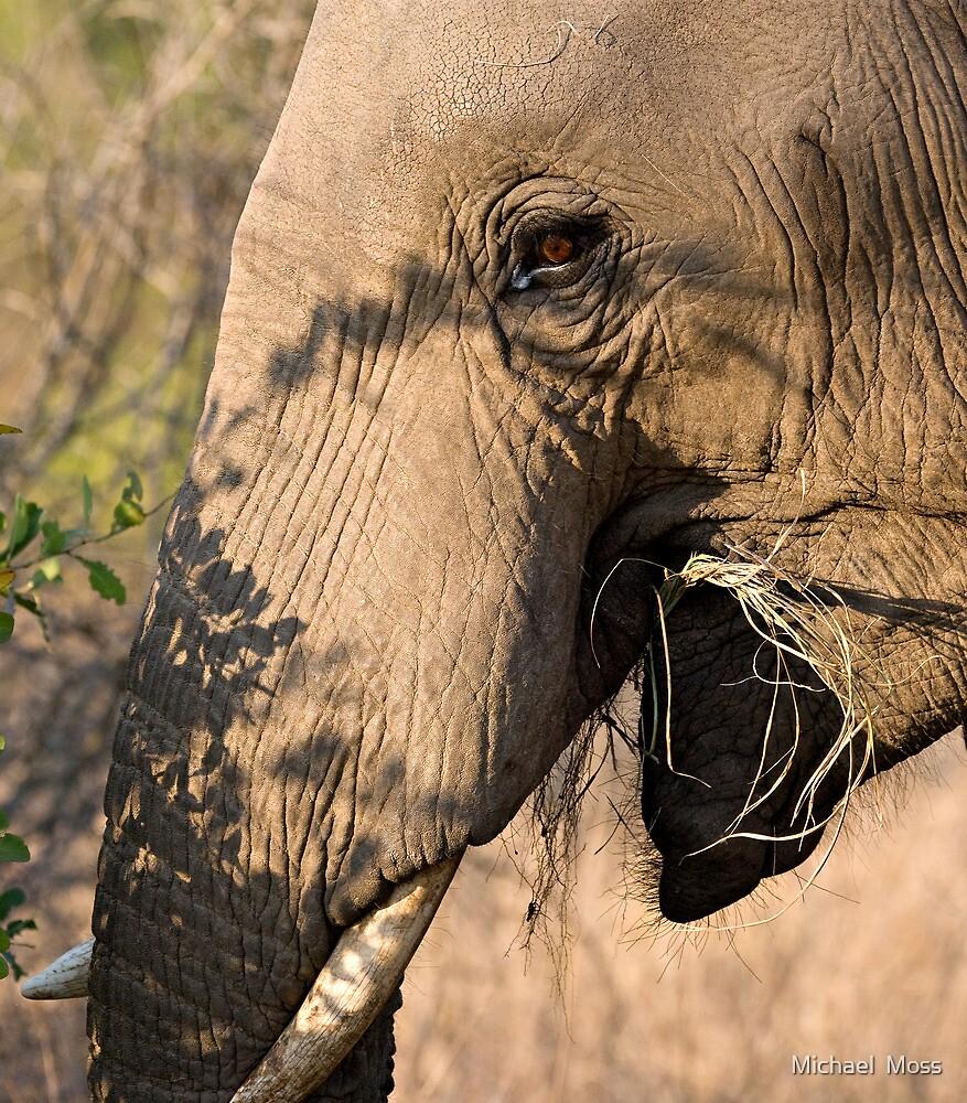 Elephant Brunch by Michael  Moss