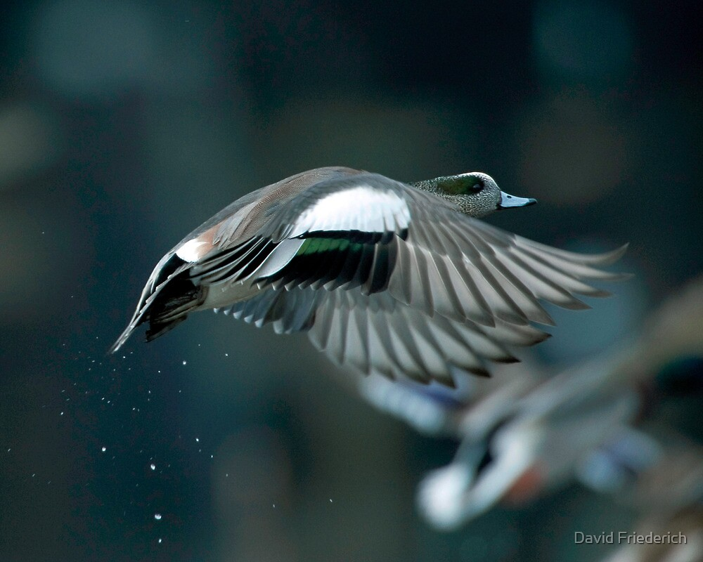 Into the Air by David Friederich