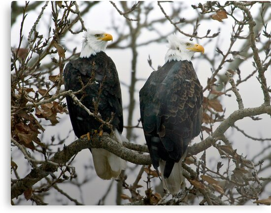 Eagles at the Solstice by David Friederich