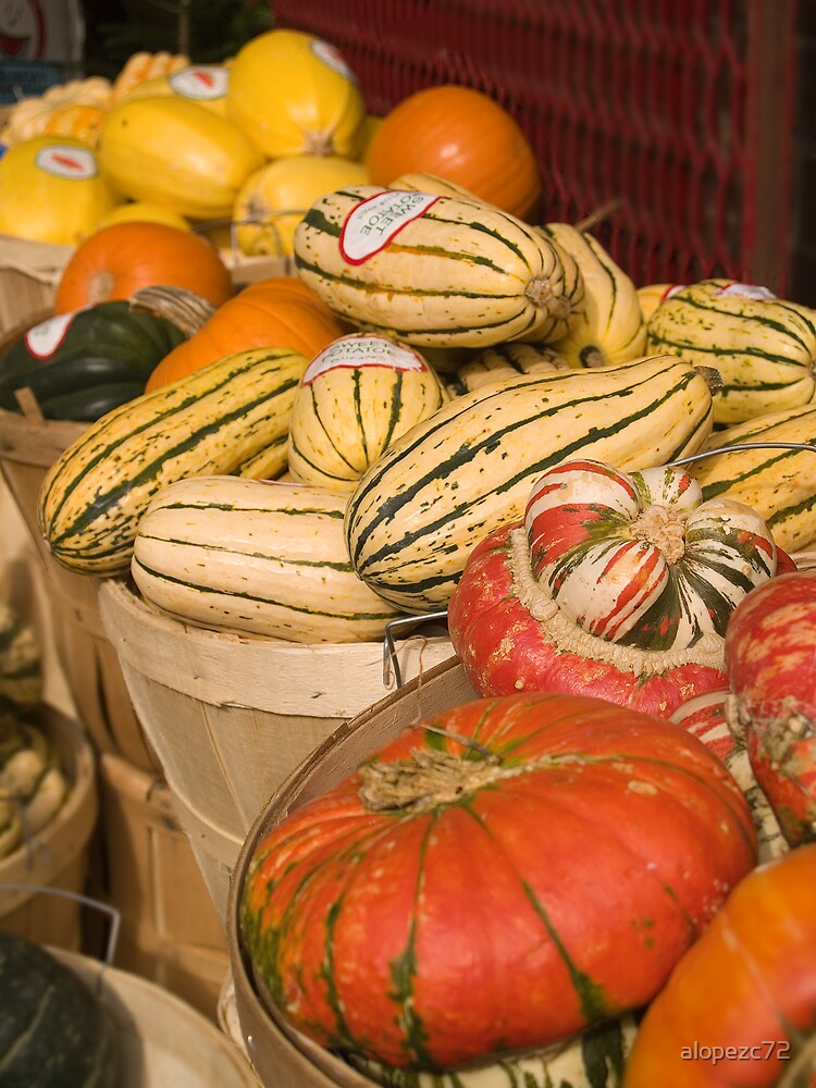Classes of Pumpkins in a street market, Toronto by alopezc72