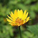 Wild flower by ECH52