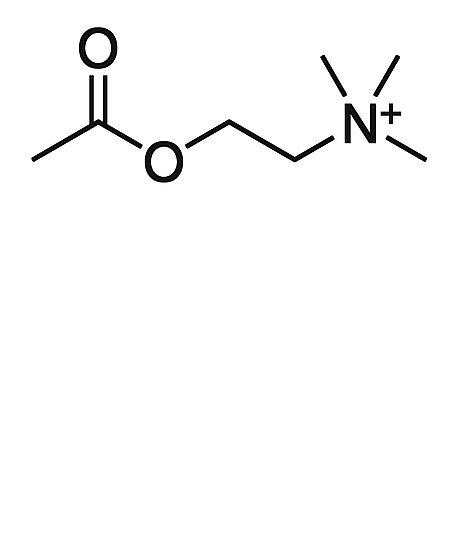 """""""Acetylcholin-Struktur-Chemie Und Biologie-Design"""" Poster"""