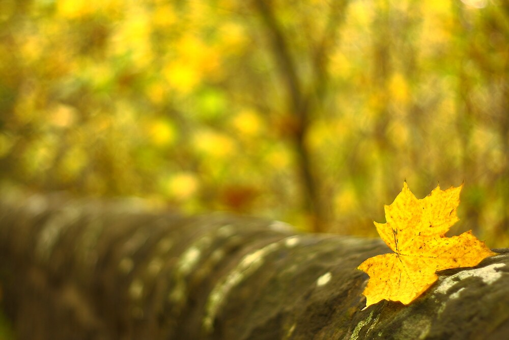 Leaf by NestorM