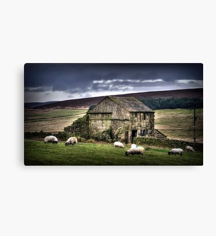 A barn and some sheep Canvas Print