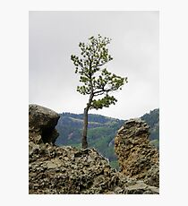 Die Hard Tree Photographic Print