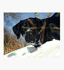 Maggie the Snowplow Photographic Print