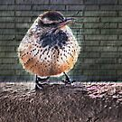 Arizona State Bird by Barbara Manis
