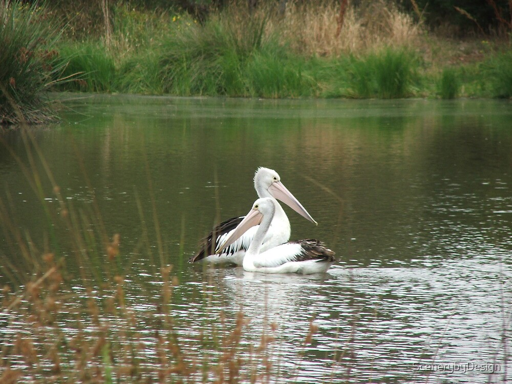 Pelican Twins by ScenerybyDesign
