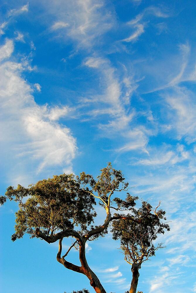 Gun Tree Sky by Bas Van Uyen