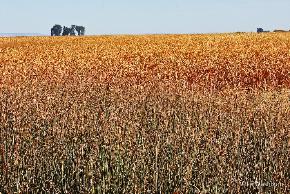 Malheur Grassy Fields by Julia Washburn