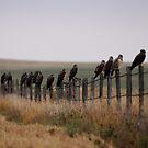 Swainson Hawk Migration by Alyce Taylor