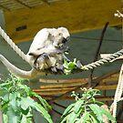 monkey at the zoo by paulenta