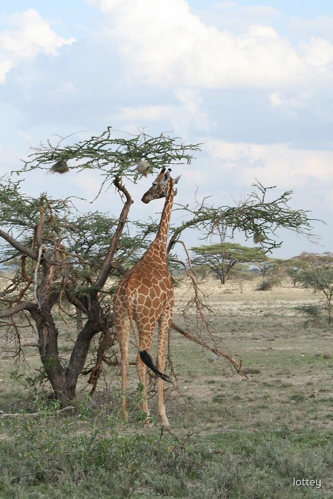 Giraffe by lottey