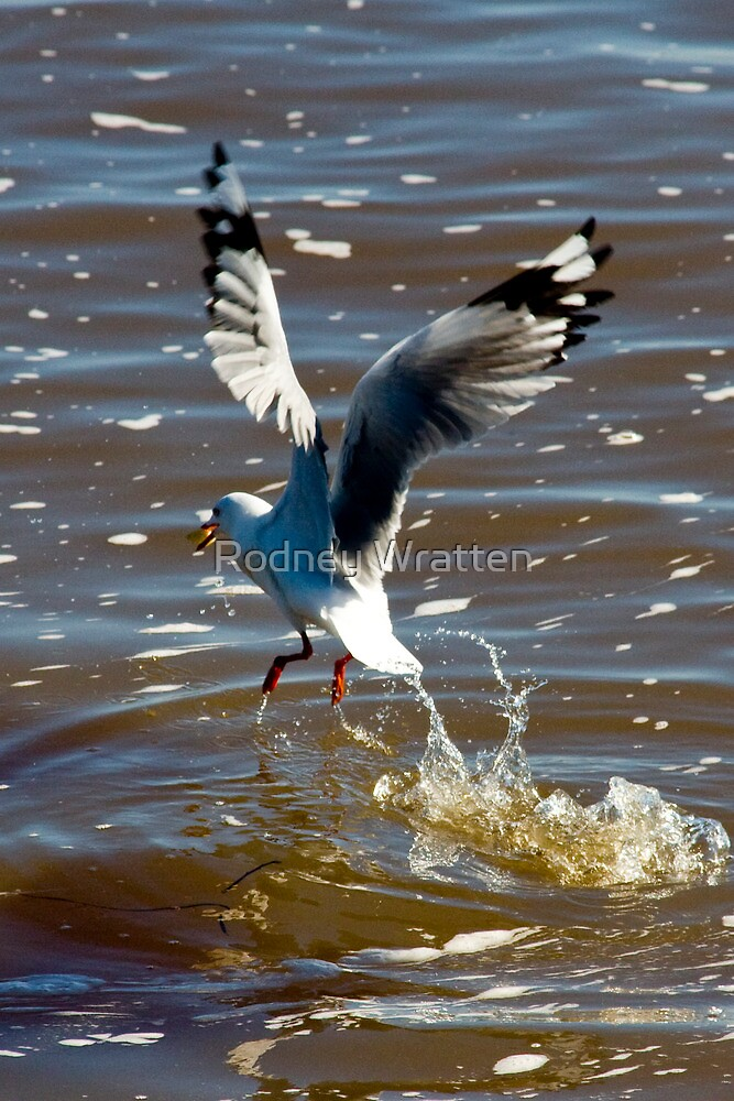 touch down & Take off by Rodney Wratten