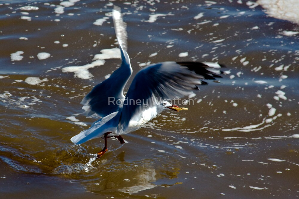 Stealing a Chip by Rodney Wratten