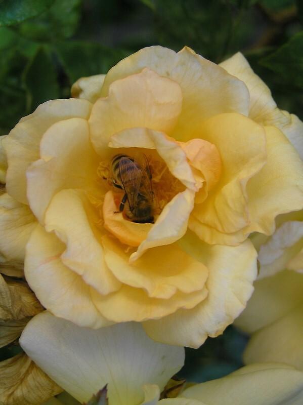 Bee in flower by Wildflower7777