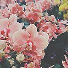 pinke Blumen von ericleeart