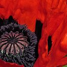 Giant Poppy Centre Point by Heather Thorsen