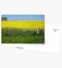 The canola field Postcards