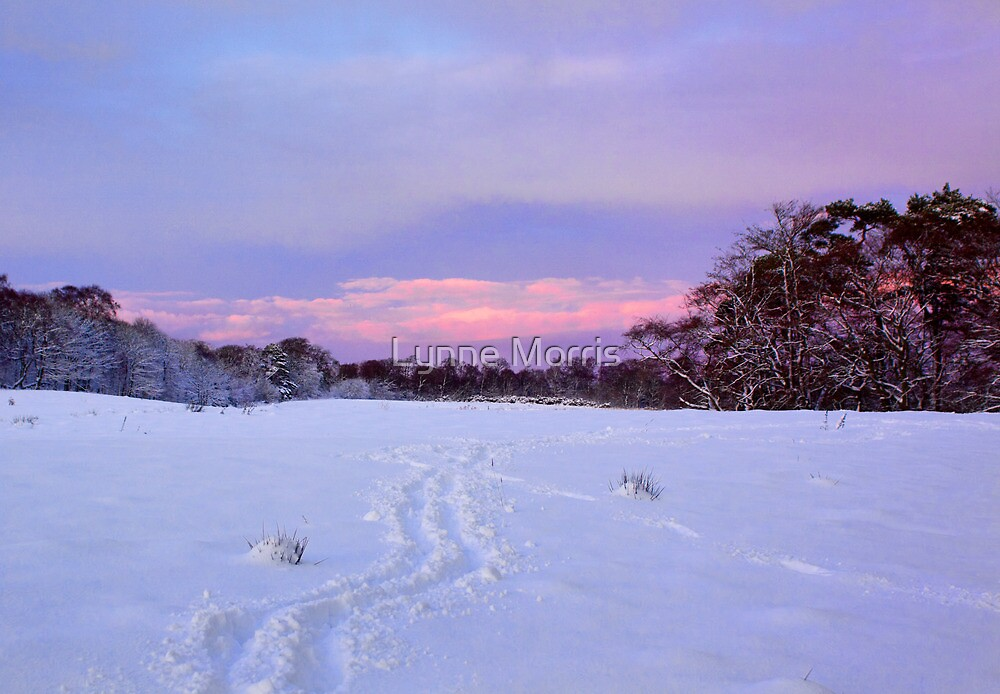 Tracks In The Snow by Lynne Morris