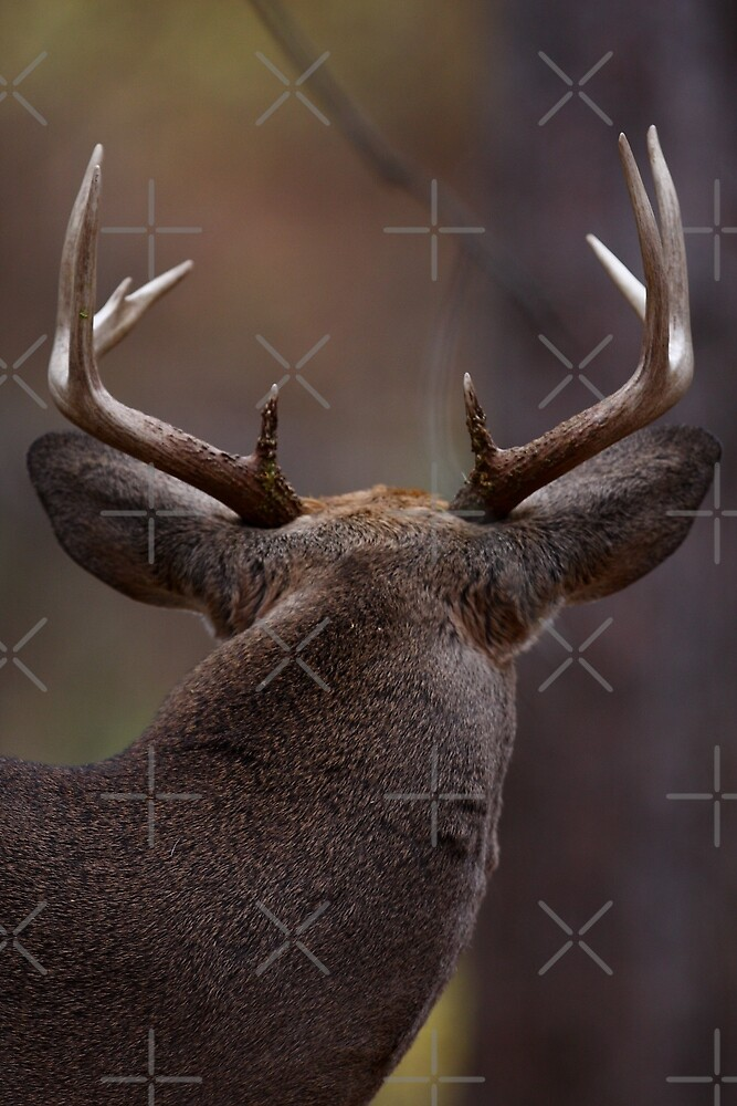 Don't look back - White-tailed Deer by Jim Cumming