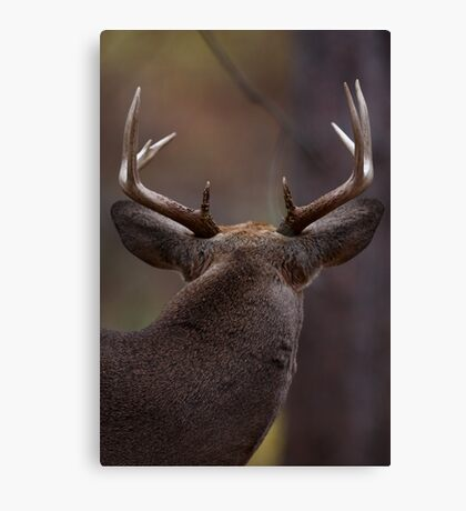 Don't look back - White-tailed Deer Canvas Print