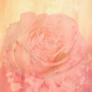 Rustic,grunge,blush,pink,rose,beautiful,floral by love999