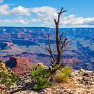 Life On the Rock, Grand Canyon by JohnDSmith