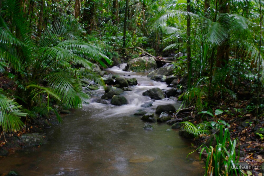 Tropical River by dwilsoning