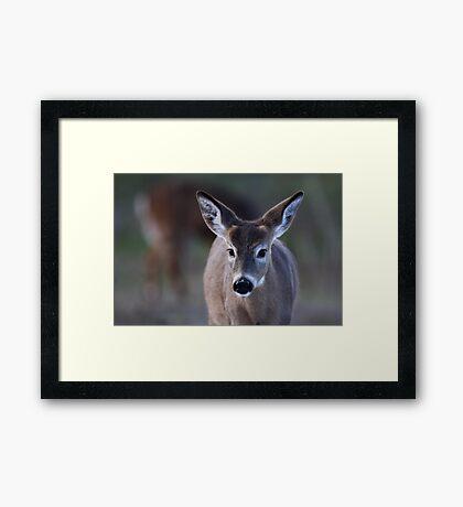 Pretty doe - White-tailed Deer Framed Print