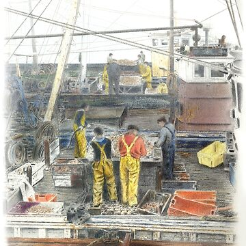 Sorting the catch by stevenhope