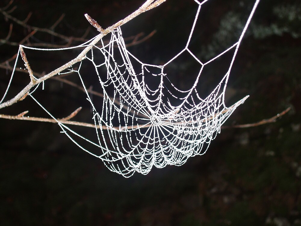 frosty web by l0chturret