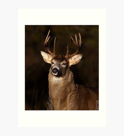 I am 'King' of this forest! - White-tailed Deer Art Print