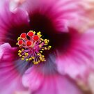 Strawberry Swirl by Margaret Barry