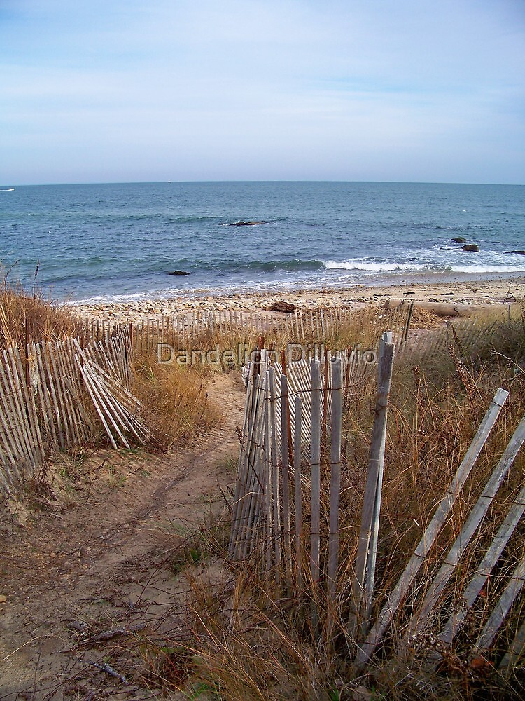 Winter Beach by Dandelion Dilluvio