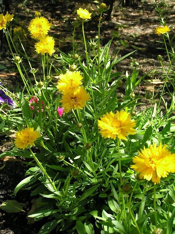 Flowers in my garden by Wildflower7777