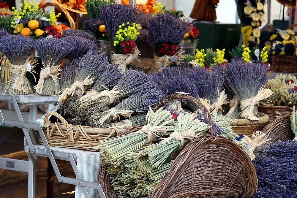 Lavender for Sale by April-in-Texas