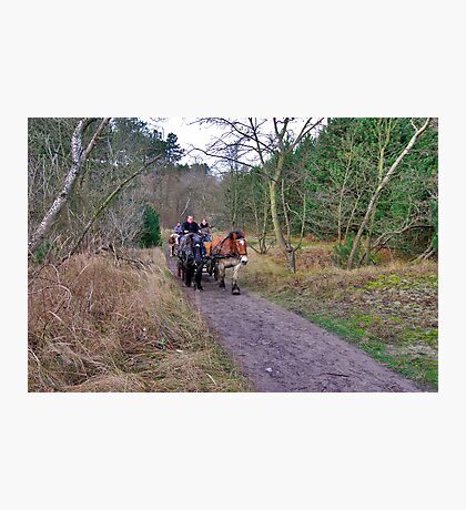 A ride through the forest Photographic Print