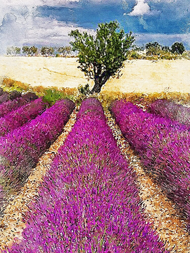 Lavender fields by ErianAndre