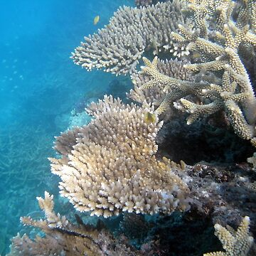 Corals. Great Barriere Reef by AlexDu