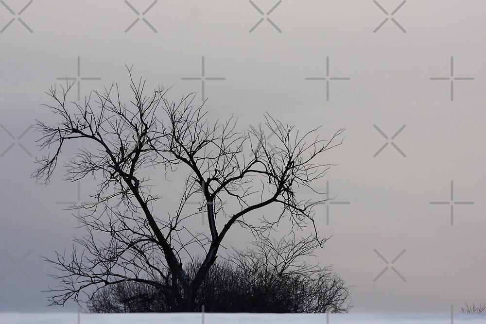 Winter Tree by Jim Cumming