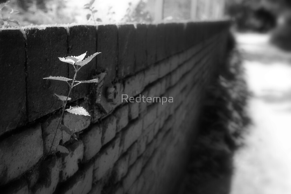 NATURE WILL PREVAIL III by Redtempa