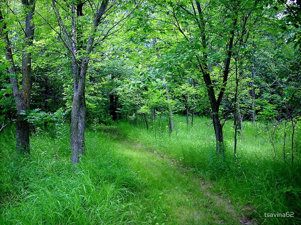Down the Trail by tsavina62