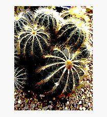 Prickly Cacti Photographic Print