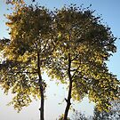 Two Trees In One by tomeoftrovius