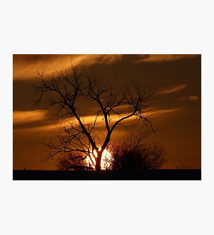 Fireball Sunset tree Photographic Print